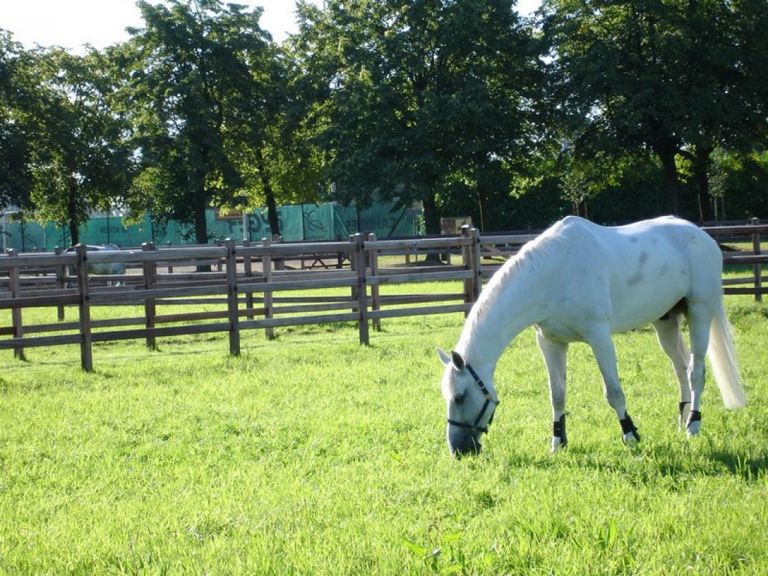 Installer une clôture pour chevaux.
